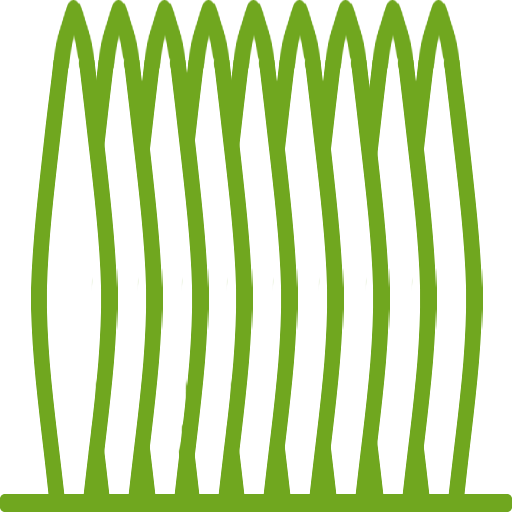 Hecken immergrün